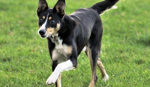 Povestea lui Jack, câinele despre care nimeni nu și-a dat seama că are o problemă!