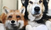 Prietenie NEBĂNUITĂ dintre doua animale din specii diferite I VIDEO AMUZANT