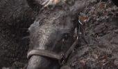 Operațiunea contra cronometru de salvare a unui CAL cazut în hazna / VIDEO