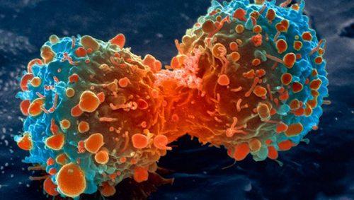 Ce animale au dezvoltat REZISTENȚĂ TRANSMISIBILĂ la CANCER