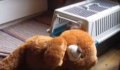 Arvo, cel mai CĂPOS câine din lume, a reușit imposibilul! VIDEO
