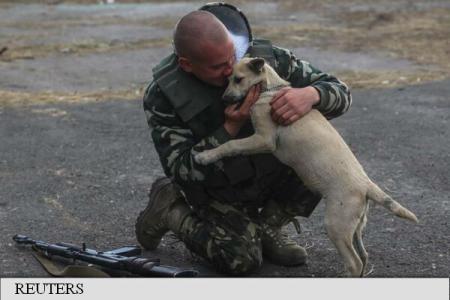 """Câteva animale ABANDONATE susțin moralul LUPTĂTORILOR de pe front: """"În cazul unui pericol sunt ca…"""""""