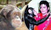 Cum a ajuns cimpanzeul lui Michael Jackson o CELEBRITATE la Miami