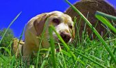 De ce câinele meu mănâncă IARBĂ?! Uite care este motivul și ce trebuie să facă proprietarii de căței în acest sens