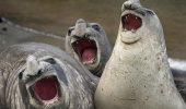 Cele mai amuzante poze cu animale! Comedy Wildlife Photography îşi premiază câştigătorii / Galerie foto