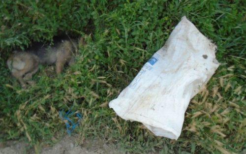 Cruzime FĂRĂ LIMITE pentru animale: O cățelușă a fost găsită legată și băgată într-un sac