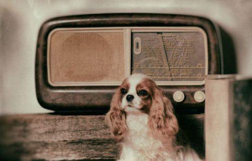 INVENȚIE INCREDIBILĂ! Uite cum a rezolvat un iubitor de animale problema câinilor care nu suportă să stea singuri acasă