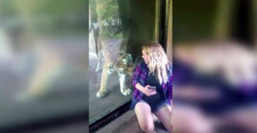 Reacția unui TIGRU când vede o femeie însărcinată. Nu poți crede așa ceva I VIDEO