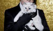 Pisica DIVĂ CHOUPETTE trăiește în HUZUR, este alintata lui Karl Lagerfeld și face MILIOANE de euro