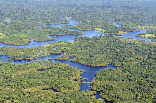 Descoperire incredibilă în zona Amazonului. Aproape 400 de SPECII NOI, de plante și animale
