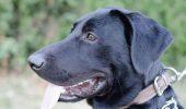 Apelul DISPERAT al unei iubitoare de animale: Aris are nevoie de AJUTOR! TRAGEDIA produsă după un DIAGNOSTIC şi un TRATAMENT AGRESIV pus GREȘIT