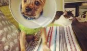 Cum a fost salvat un cățel după ce a fost TORTURAT de stăpân I VIDEO