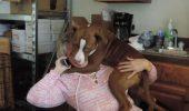 Acest câine a trăit în CONDIȚII GROAZNICE, dar priviţi-l cum își arată RECUNOȘTINȚA față de cea care l-a salvat I VIDEO