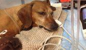 SOS BUCUREŞTI!!! Otrava care îți poate UCIDE ANIMALUL DE COMPANIE într-o ORĂ! / FOTO