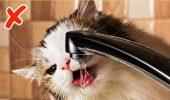 SEMNE clare care spun că animalul tău de companie are nevoie să fie dus de URGENȚĂ la medicul veterinar