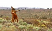 Fotografii DISTRACTIVE cu animale! I GALERIE FOTO