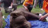 IMAGINI CUTREMURĂTOARE! Animale lăsate să MOARĂ DE FOAME I VIDEO