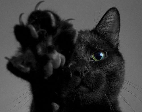 Astăzi este Ziua Internațională a Pisicilor Negre!