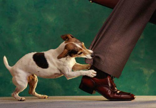 Lecție de prim ajutor! Ce trebuie să faci în cazul mușcăturilor de animale