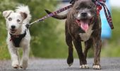 Poveste EMOȚIONANTĂ a unui cățel orb și a prietenului său patruped I FOTO