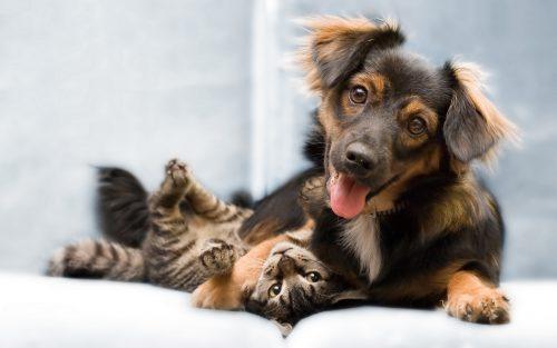 Vești Bune! Castrarea câinilor şi pisicilor care nu sunt de rasă va fi făcută gratuit