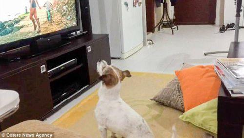 Reacția ADORABILĂ a unui cățel atunci când stăpânul îi întrerupe hitul preferat I VIDEO
