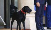 Cuplul Macron a adoptat un câine. Uite ce nume i-au dat patrupedului, un metis de labrador și grifon