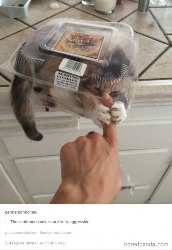 Cele mai AMUZANTE poze cu pisici. Te vor face să râzi cu lacrimi! I FOTO