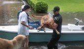 IMAGINI TERIFIANTE! Furtuna tropicală Harvey a făcut VICTIME și printre ANIMALE! FOTO-VIDEO