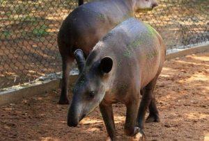 Mai multe ANIMALE au fost furate de la o ZOO