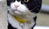 Pisica secretarului britanic de externe prinde mai mulți șoareci decât felina premierului Theresa May