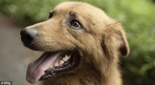 Caz ULUITOR al unui câine orb, care își coordonează turma doar cu ajutorul nasului și urechilor