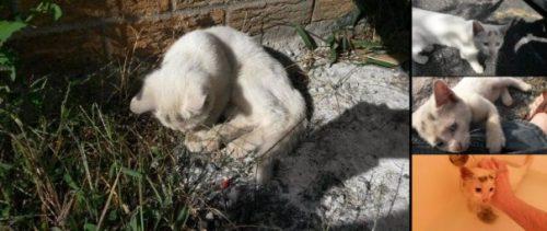 Un tanar a hranit o pisicuta abandonata. Nici nu si-ar fi putut imagina care vor fi consecintele faptei sale!