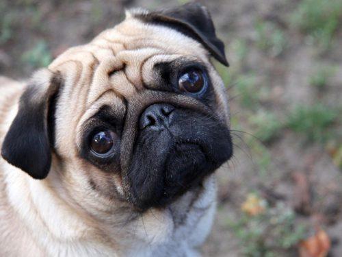 """Anunţul care îi va scoate din sărite pe toți iubitorii de animale: """"Vând căţel. M-am plictisit de el, nu-mi mai place culoarea"""""""