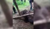 """Urs rămas CAPTIV într-un laț lângă casele oamenilor: """"Ne atacă, suntem lângă pădure"""""""