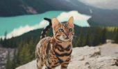 SUKI, felina cu viață de vis și călătorii de invidiat