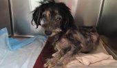 Avea nevoie de un MIRACOL ca să poată trăi. Medicii veterinari nu i-a dat nicio ȘANSĂ
