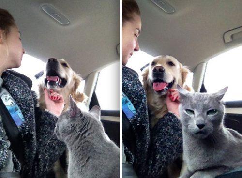 Pot TRĂI pisicile și câinii într-o ARMONIE RELEVANTĂ? Voi ce părere aveți?