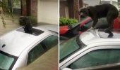 VIDEO EMOȚIONANT! Cum s-a SALVAT un câine de la înec în ultima clipă