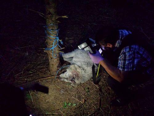 Imaginile care au provocat FURIE pe internet: câine găsit legat de gât și copac. Uite ce au făcut cei care l-au găsit