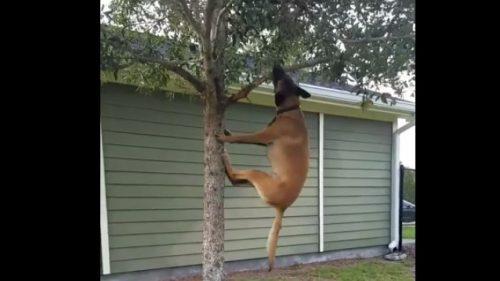 Un CĂȚEL AMUZANT adoră să se JOACE cu o creangă de copac – VIDEO