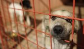 CUTREMURĂTOR! VESTEA a căzut ca un trăsnet: ZECI de câini VOR FI OMORÂȚI!