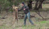 CONFRUNTAREA dintre OM ȘI ANIMAL a fost DECISĂ DE  UN CROȘEU spectaculos  – Video cu momentul de box