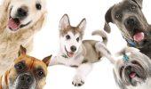 Tu știi ce tip de BLANĂ are campionul tău canin? Tot ce trebuie să știi despre nevoile fiecărui tip de blană în parte?