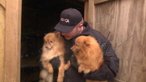 Moment EMOȚIONANT! Peste 40 de câini ținuți CAPTIVI ILEGAL