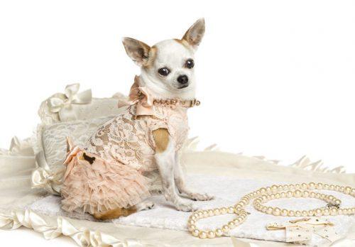 De ce apare obsesia STĂPÂNILOR pentru animalele lor de companie?