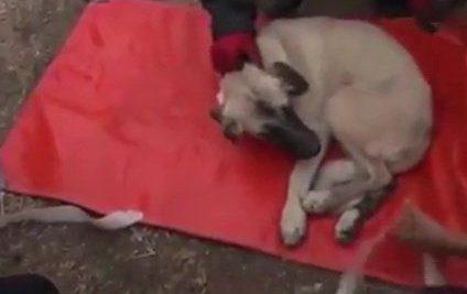 Modul INUMAN în care a fost TORTURAT un câine de niște băieți I VIDEO TERIFIANT