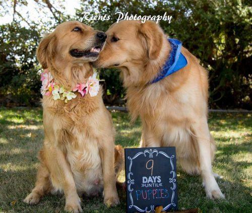 Chanel și LeeRoy vor deveni părinți. Uite ce au făcut stăpânii pentru ei