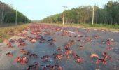 Uimitor! După uragan, invazie de crabi! Milioane de crustacee au pus stăpânire pe o șosea
