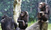Ultima DESCOPERIRE făcută de cercetători în Uganda. Rămâi cu GURA CĂSCATĂ
